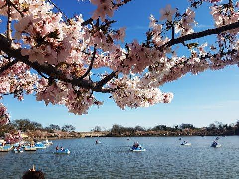Washington DC Una foto vale más que mil palabras