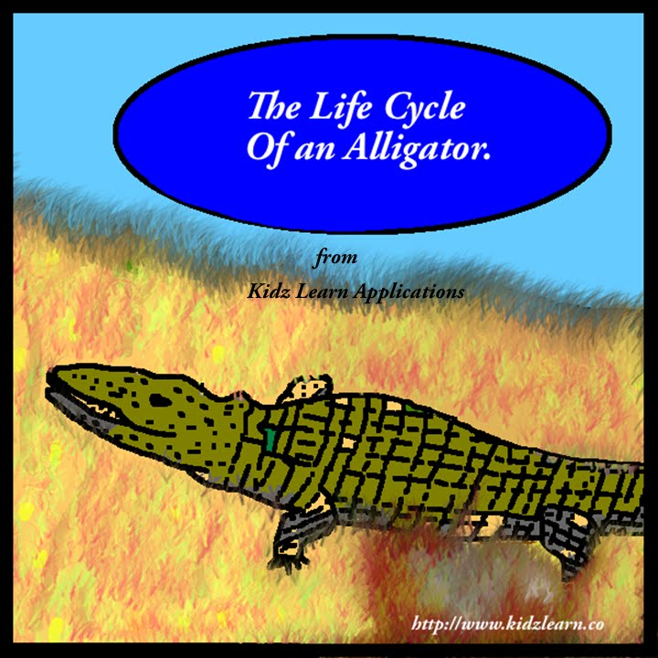 Life Cycle Of An Alligator