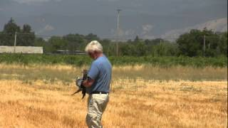 Hawk Release Lake county California