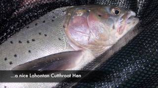 TackleTour - Fishing for Lahontan Cutthroat Trout at Pyramid Lake, Nevada
