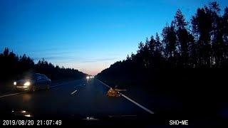 Сбила лося на трассе Северодвинск - Архангельск.