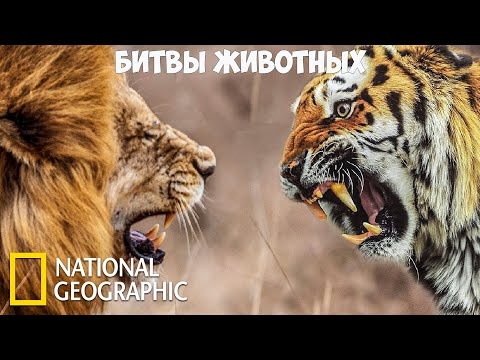 Самые опасные животные - Битвы животных | (National Geographic)