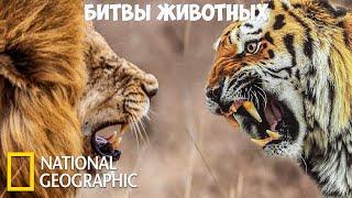 Самые опасные животные - Битвы животных   (National Geographic)