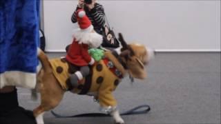 Животные в карнавальных костюмах
