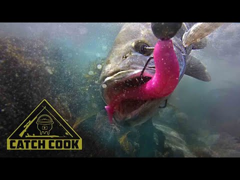 Dropshotting for Kob in the Eastern Cape, South Africa PLUS BONUS UNDERWATER FOOTAGE | CATCH COOK