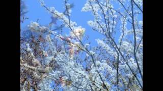 21 Marzo Benvenuta primavera.
