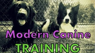 Introduction To Modern Canine Training Channel