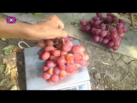 Тутовая ягода шелковица: фото и рецепты