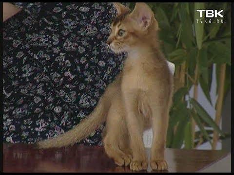 Как успокоить котёнка :: как успокоить разыгравшегося