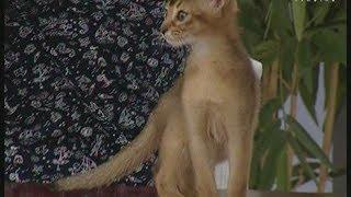 Советы ветеринара: как успокоить гиперактивного кота