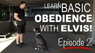Basic Obedience Dog Training with Elvis | Episode 2