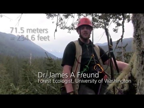 Life in an Olympic Rain Forest Tree Top