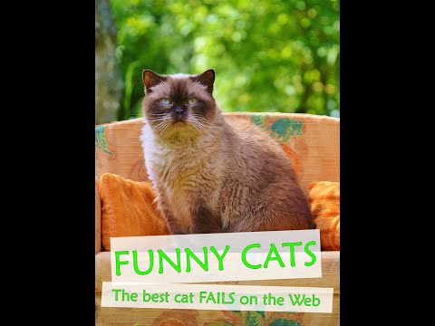 New funny cat fails compilation. Best funny cats compilation June, 2019