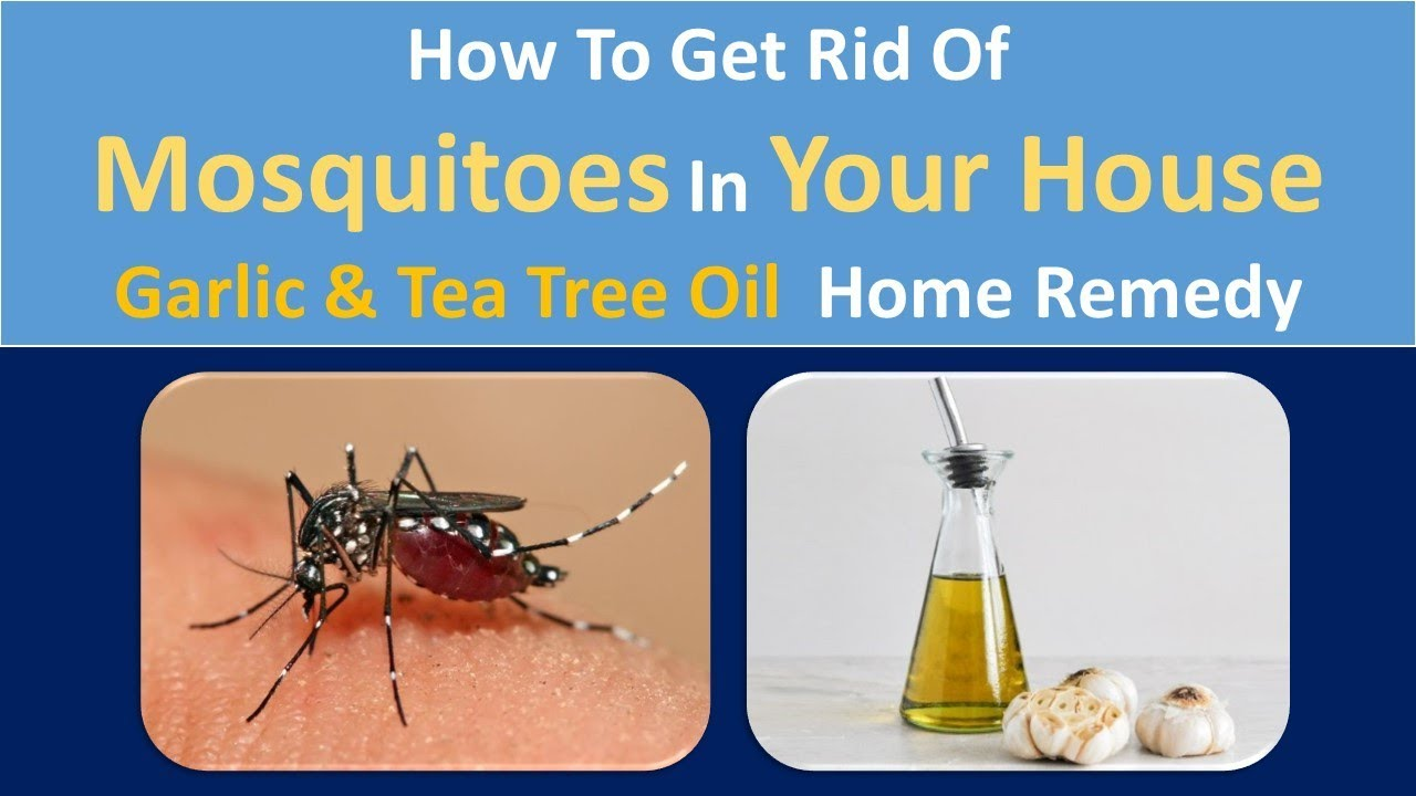 How To Get Rid Of Mosquitoes In Your House Naturally Garlic Coffee Grounds Home Remedy