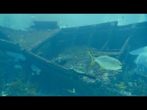 समुद्री मलबा और ढेर सारी मछलियां.Marine debris.Underground Sea wreckage and lots of fishes