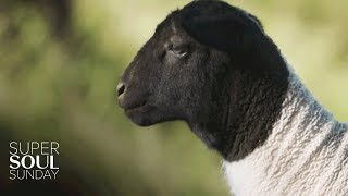 SuperSoul Short: Orphan Lamb Struggles to Find a Home in Apricot Lane Farms | SuperSoul Sunday | OWN