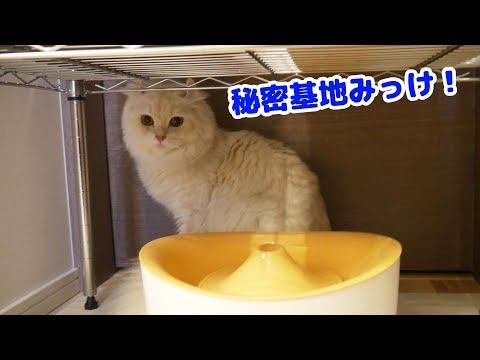 猫の◯◯をリニューアルオープンしました