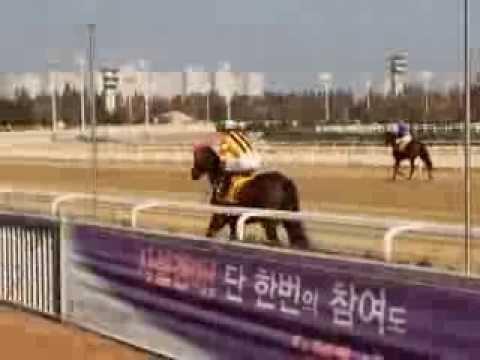 Horse racing in Seoul