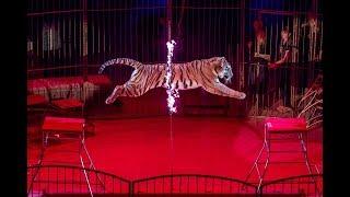 Владивостокский цирк готовится к открытию