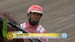 Kusken Peter Untersteiner tar 14 hästar till start i dagens V75 i Halmstad!!! - Nyhetsmorgon (TV4)