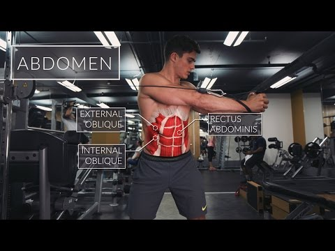 Exercise Anatomy: Abs Workout | Pietro Boselli