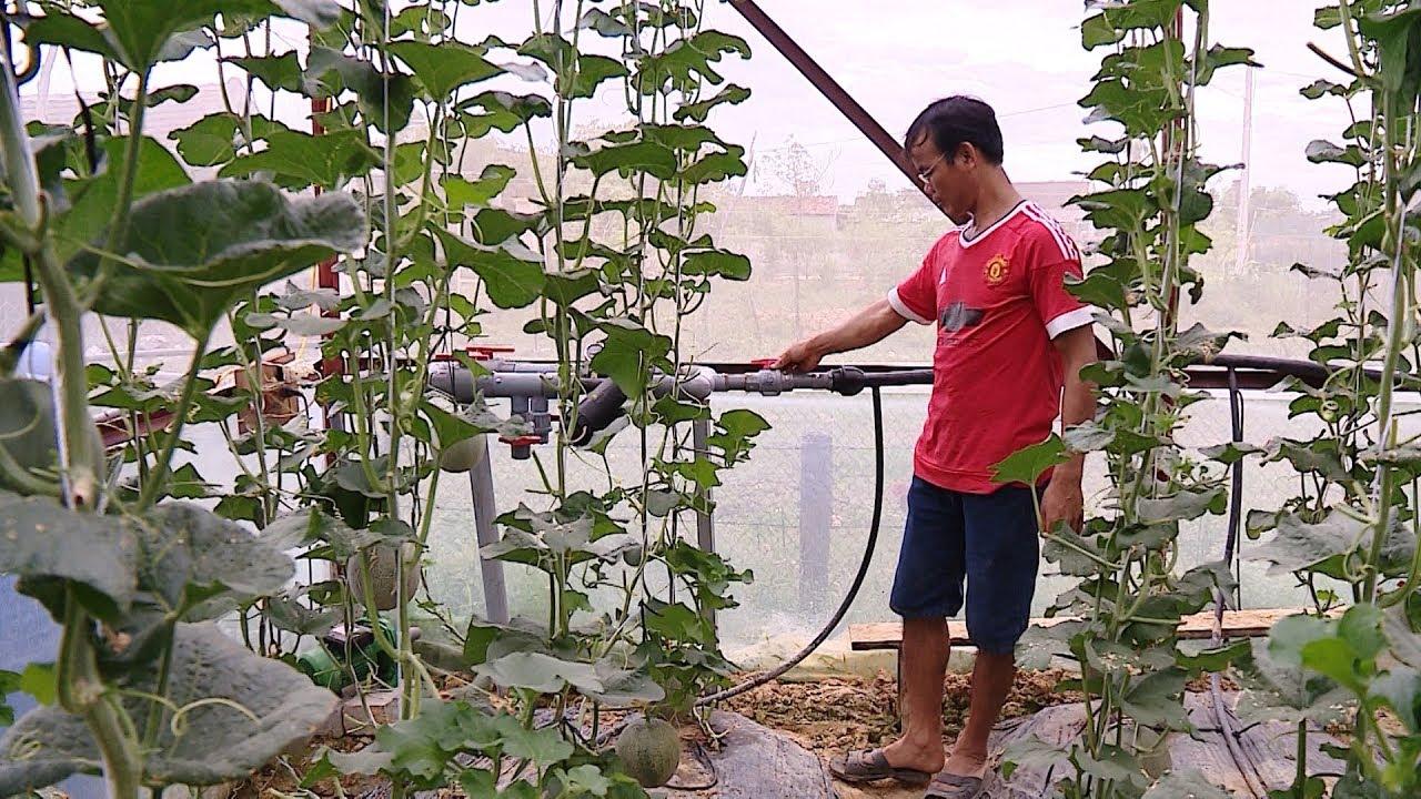 Phát triển nông nghiệp công nghệ cao – Hướng đi tất yếu để hội nhập