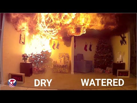 Dry Christmas Tree vs Well Watered Christmas Tree - YouTube
