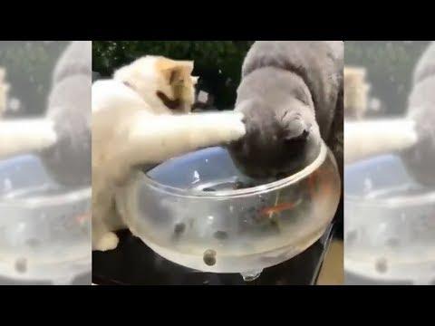 Smaller Cat Defends His Aquarium | Fish Tank Review 25