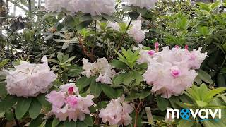 Смотреть видео Ботанический Сад Москва /Оранжерея //Тропики в Москве!)//Как прекрасен этот мир - посмотри!!! онлайн