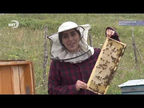 Дагестанские пчеловоды и