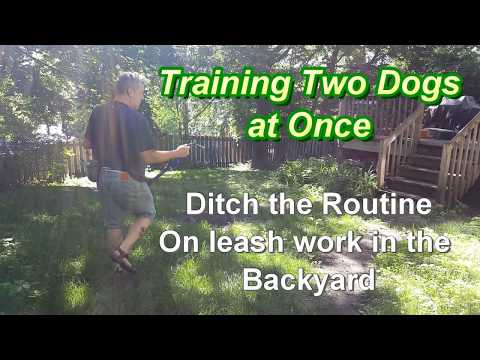Training 2 Dogs at Once - Ditching the Routine