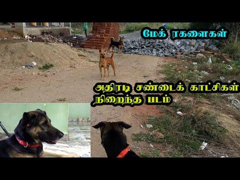 மேக் ரகளைகள் | அதிரடி சண்டைக் காட்சிகள் நிறைந்த படம் | Funny Dog Videos in Tamil