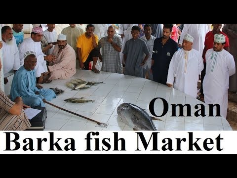 Oman/Barka Fish Market Part 37