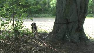 Squirrel Dog Training