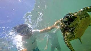 Vlog | Misión Tortuga: Capitulo 2