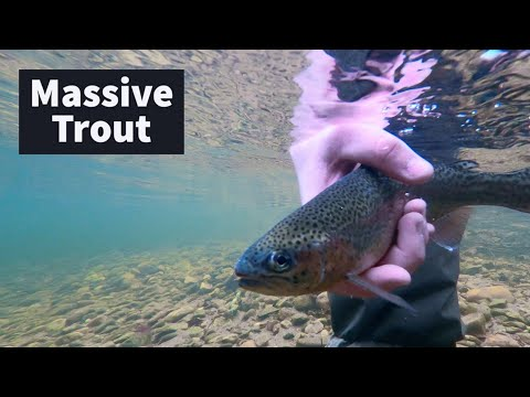 TROUT FISHING CT Streams And Trying NEW SPOTS