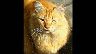 Подмигивающий кот,футаж