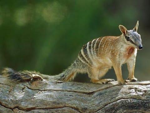 Marsupial - 18 Kinds of Marsupials