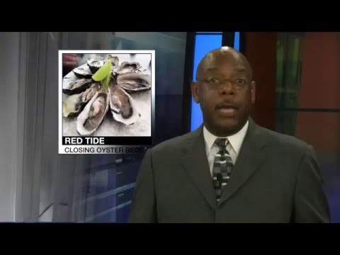 Red Tide shuts down Louisiana oyster beds