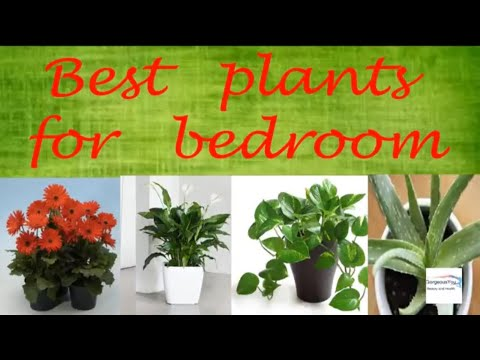 12 Plants To Keep In Your Bedroom For Better Sleep|Best Plants For Bedroom|Gorgeous  You|