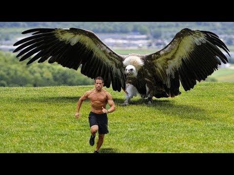 Die 10 grössten Vögel der Welt!