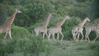 Kariega Game Reserve Wildlife Safari