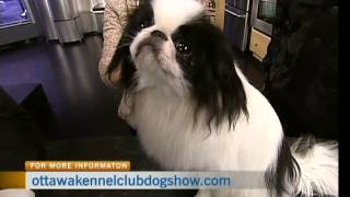 Ottawa Kennel Club Dog Show