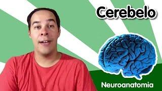 [Neuroanatomia] 5 - Cerebelo