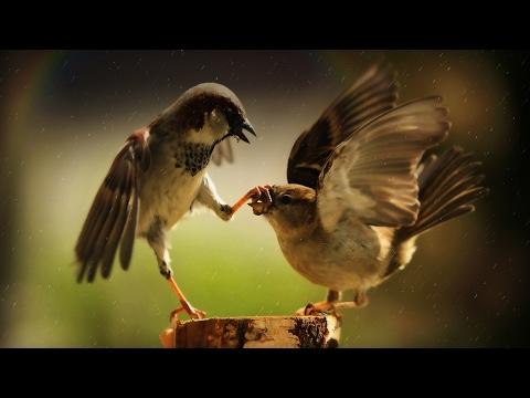 Голодные Твари (Птицы-убийцы 2017 - ужасы, триллер, мистика)
