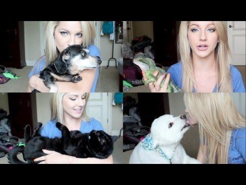 """Meet My Pets ♡ """"Pet Tag"""""""