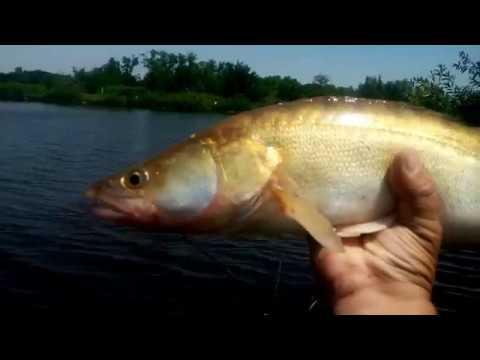 3 Cum descurc plasele ? ... Pescuit la plase pe Lacul Boteni 1, film unicat pe youtube from YouTube · Duration:  25 minutes 17 seconds