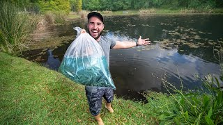 Training My PET Fish How to Feed from H...