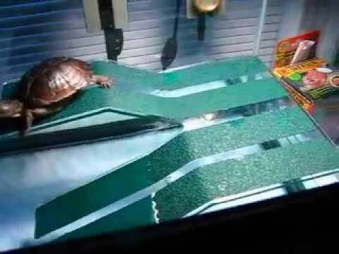 Diy Large Turtle Basking Platform