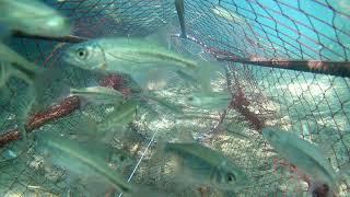 Ловушка на рыбу зонтик против самодельной ловухи подводные съёмки впоймал змею